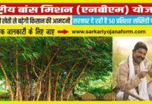 बाँस सब्सिडी योजना 2020 मध्यप्रदेश - किसानों को 50% अनुदान पर मिलेंगे बाँस के उन्नत पौधे