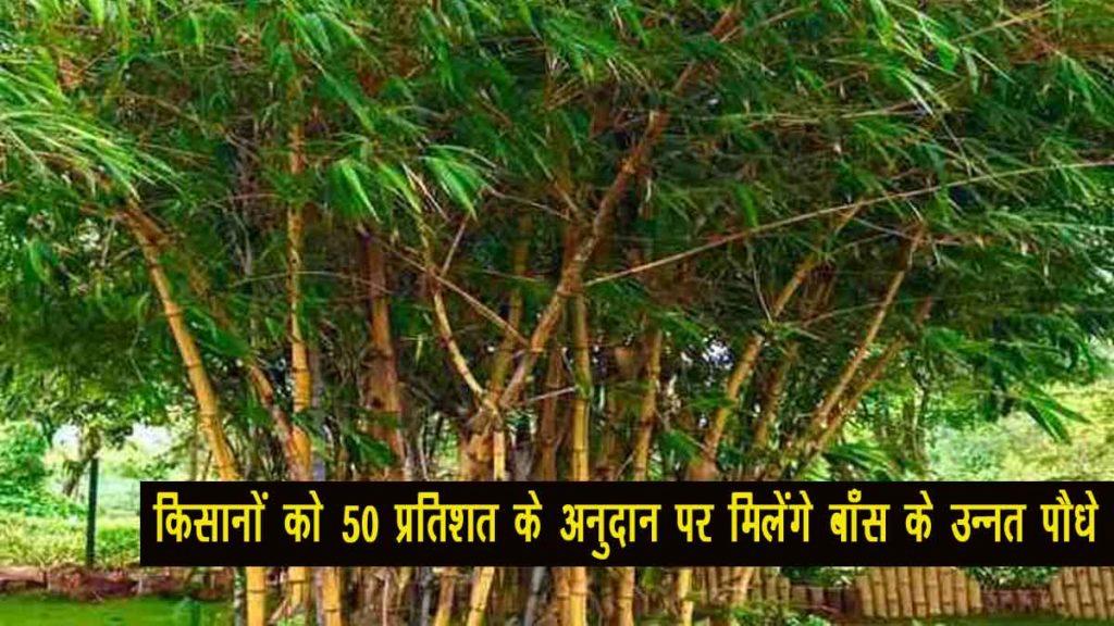 baans subsidy yojana