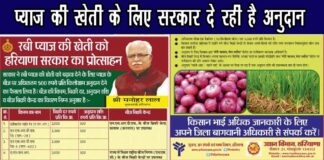 प्याज बीज अनुदान योजना |haryana farmers are getting subsidy on onion seeds for up to rs 500 read whole news in hindi